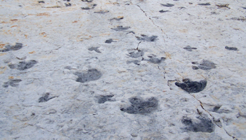 FT-01 Dinosaur Ridge and Triceratops Trail