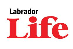 Labrador Life